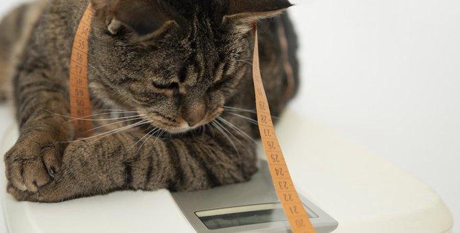 猫の糖尿病の症状と原因から治療法まで