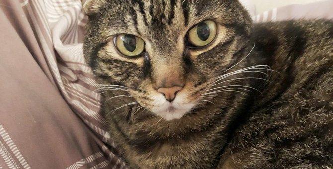 ご飯を選べる贅沢を味わう猫?|Laylaのペットリーディング