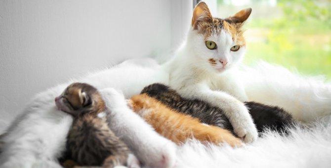 親猫が子猫を食べるのは本当?考えられる7つの理由
