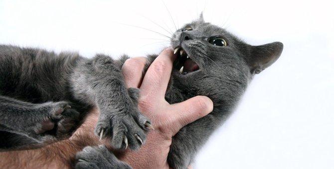 猫が夢に出て来る時の意味と注意点