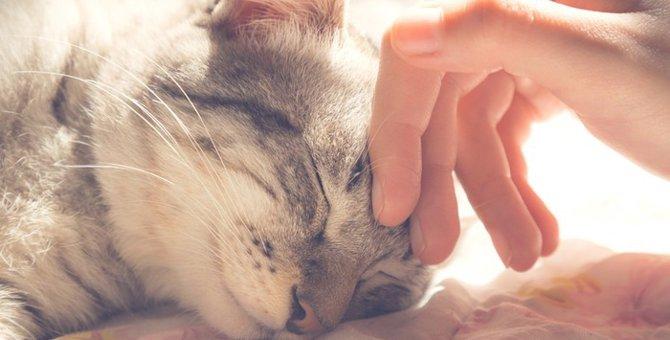猫が「すりすり」してくる4つの理由