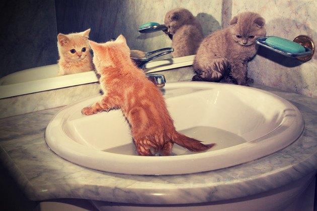 前田敦子さんが飼ってる猫の種類や名前