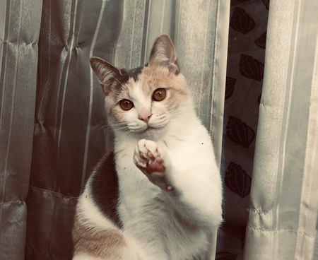 どうして?ペット可なのに「猫はNG」な賃貸マンションがある理由