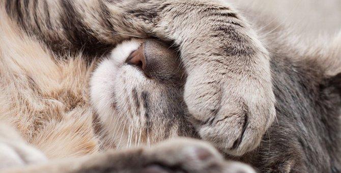 猫カリシウイルスとは?感染した時の症状や治療の方法