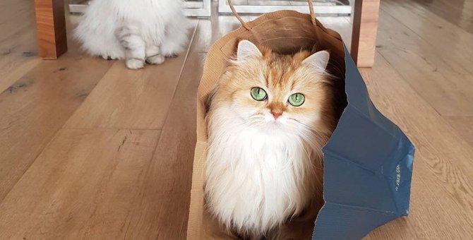 「スムージーちゃん」はどんな猫?世界中で人気な理由