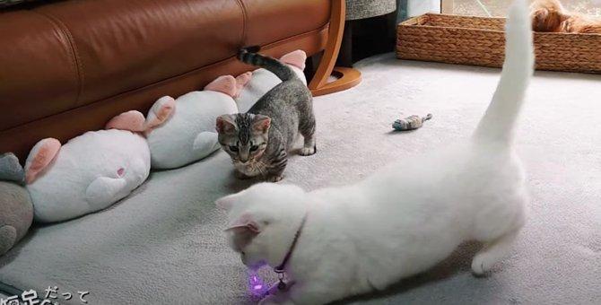 ぴょこぴょこ走る姿が可愛い♡猫さんたちのリレー!