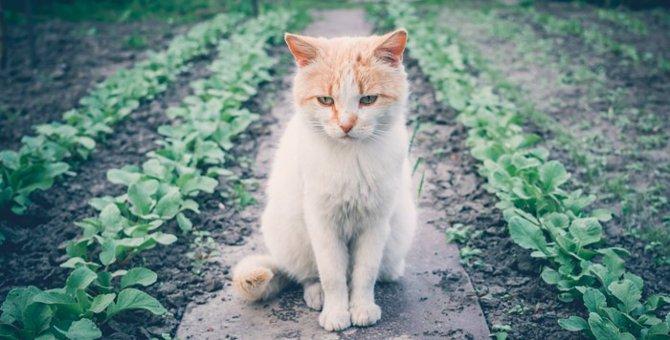 なぜ猫はきゅうりに驚くのか…その理由を徹底追求!