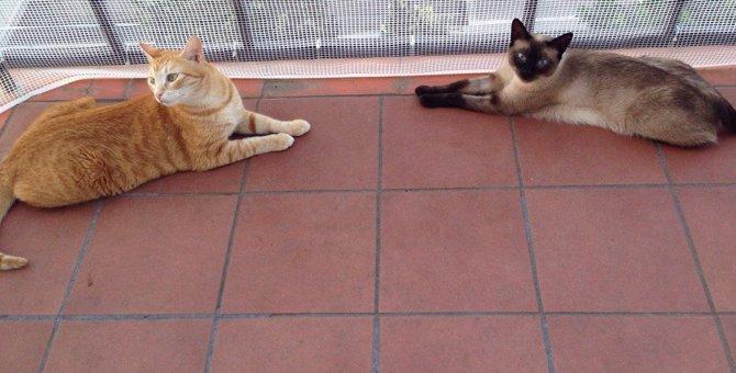 猫を『バルコニー』に出す時に注意すべきこと5つ