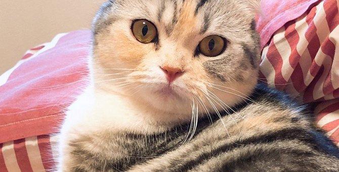 猫の『顔の形』でわかる3つの性格!その特徴と飼い方をチェック