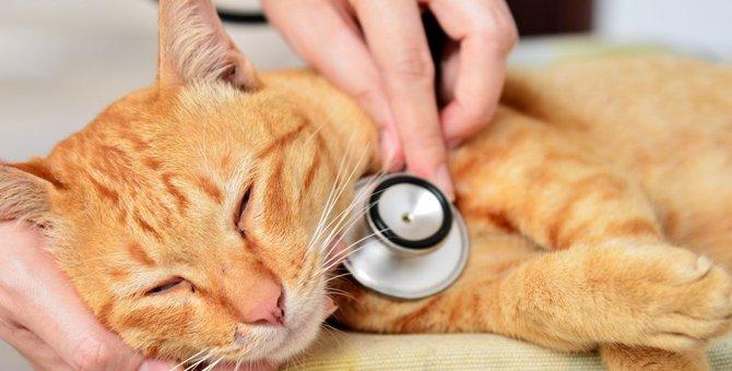 病気の可能性も。非常に危険な猫の嘔吐7つ