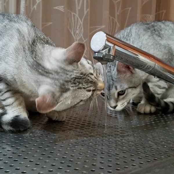 愛猫の「水嫌い」は克服できる?
