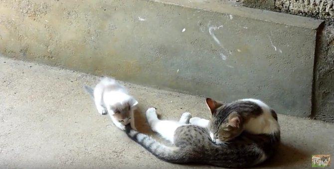 激しいバトルをする2匹の猫、ワンコの仲裁で瞬時に中断!