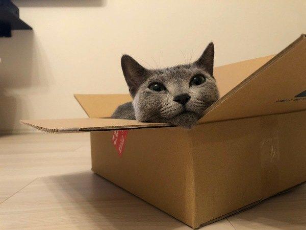 猫の『トイレ掃除』でするべきではないNG行為3つ!正しい手順や注意点を解説