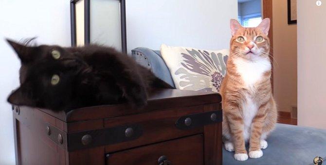 大人気保護猫コンビが『がん闘病』へ…危険な7つの兆候とは?