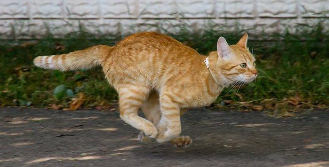 猫の身体能力の秘密は身体の構造にあり!人間よりも圧倒的に高い運動能力