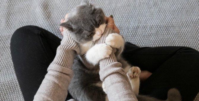 困った猫の『噛み癖』直し方5つ