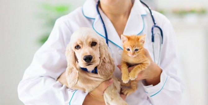 【新型コロナウイルス】ペットの扱いについて、CDCガイドライン改定。