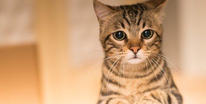 猫が孤独を感じている時にする行動4選