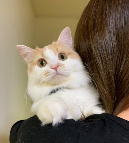 猫に抱っこ好きになってもらう方法5つ