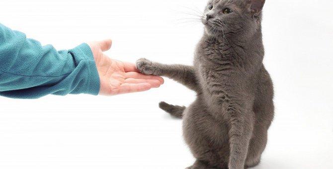 【新型コロナウイルス】パンデミック中にペットの養子縁組が急増