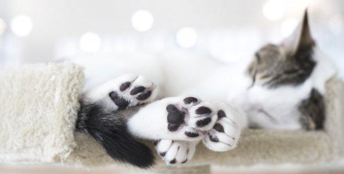 猫の足跡は犬とどう違う?3つの違いを解説!
