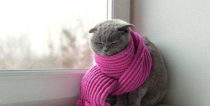 猫が『日向ぼっこ』を好きな理由は?そこに隠された3つの効果と注意点
