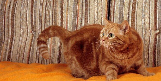 猫が『怒りで興奮しているとき』に絶対しちゃダメなこと3つ