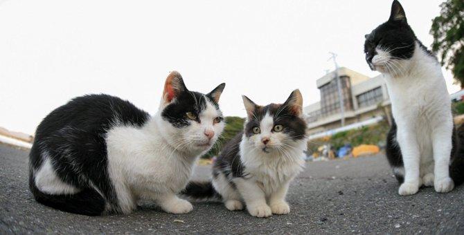 【保護猫】猫の年齢の推定方法【迷い猫】