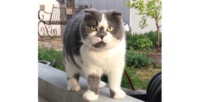 猫界のラガーマン?むっちり丸々フォルムに悶絶したという声続々!