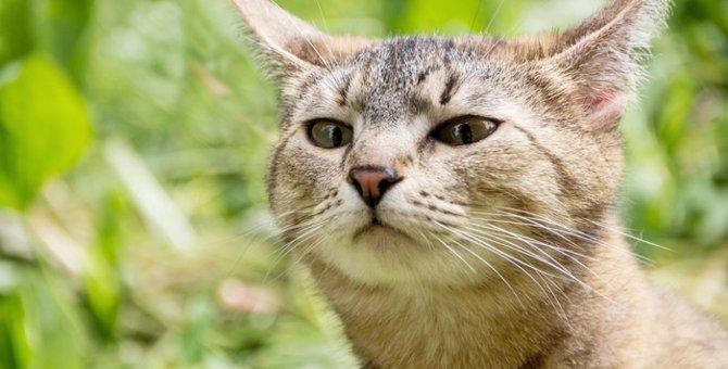 猫にも反抗期はある?時期と対処法について
