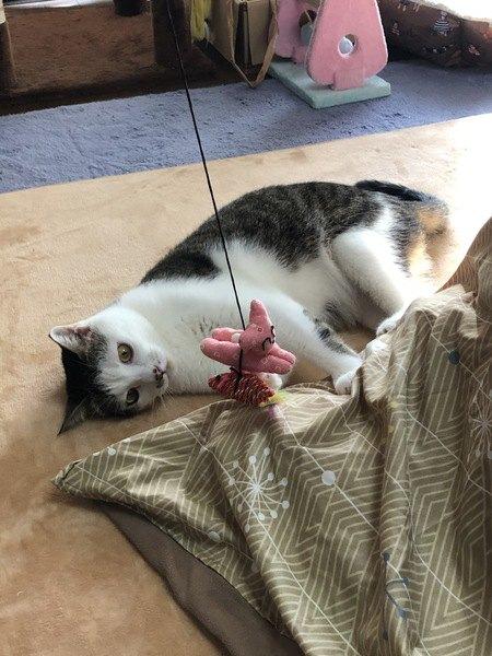 猫の性格別!一緒に楽しく遊ぶためのコツ3つ
