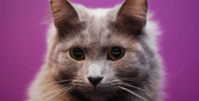 ネベロングの特徴や性格、飼い方について