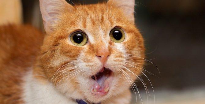 猫が口を半開きにする4つの理由