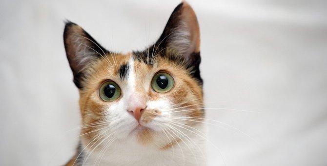 猫は色を認識出来るのか?