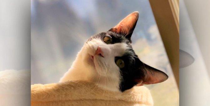 LAYLAの12猫占い【9/21~9/27】のあなたと猫ちゃんの運勢