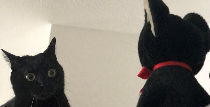 レンジフードを救え!自分にそっくりな守護神に仰天する猫が話題♡