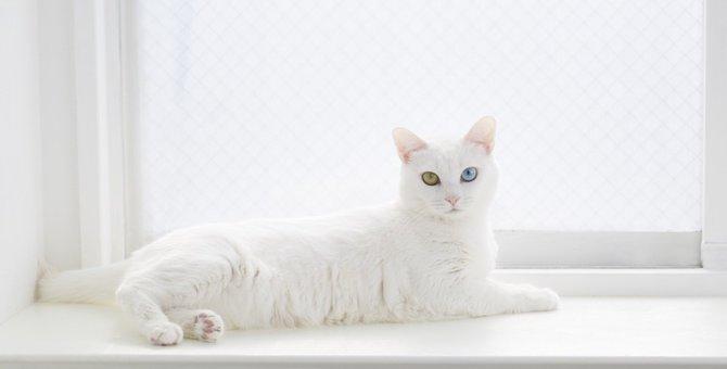 美人過ぎる猫のおすすめ画像・動画10選