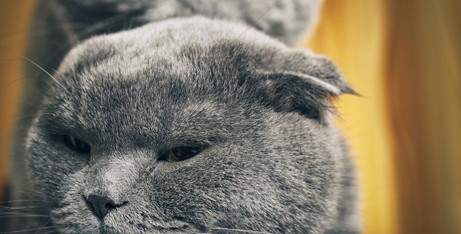 オスの猫の発情期はいつ?その特徴や期間、対策について