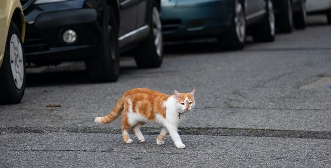 猫の交通事故を目撃したら?万が一のために知っておくべきこと