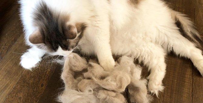 驚くほどに猫の抜け毛を除去!買ってよかったファーミネーター
