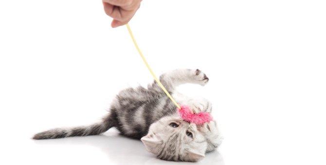 猫がおもちゃを持ってくる3つの理由
