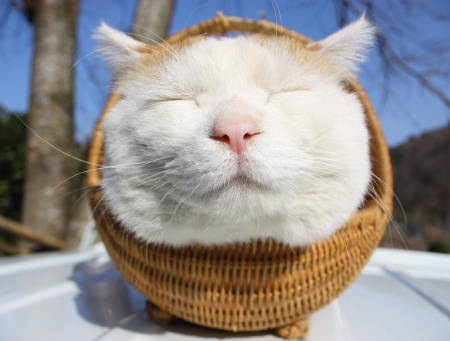 かご猫「シロちゃん」海外でも人気の有名にゃんこ