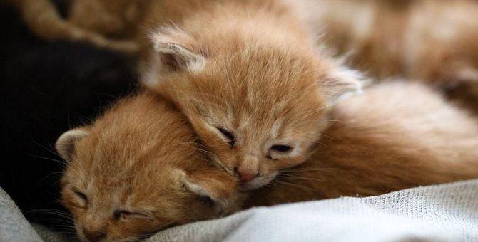 猫の飼い主が絶対にするべき5つのこと