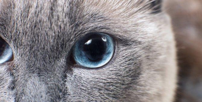 猫は人間をどう見ているの?お勧めの「猫目線」な小説