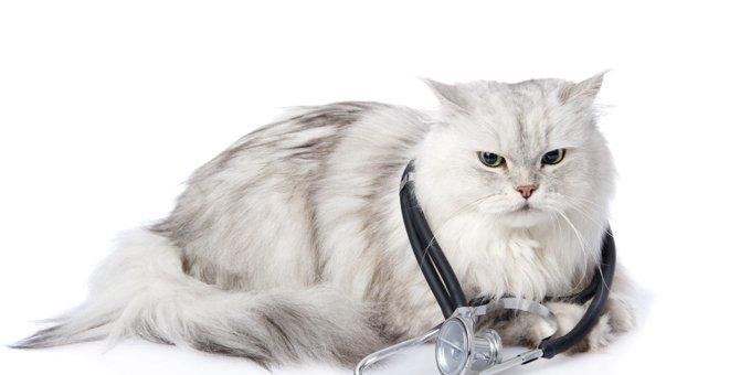 ペルシャ猫がかかりやすい病気とその注意点