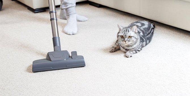猫が掃除機を嫌がる理由とオススメの掃除法