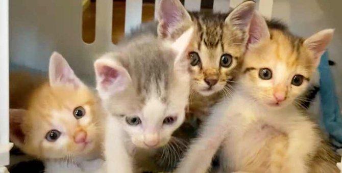 蟻だらけのダンボールに4匹の子猫…幸せな未来への扉が開く!