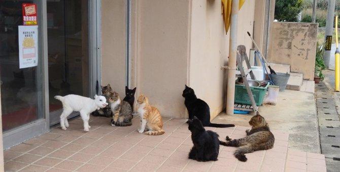 猫に馴染みすぎている『ある動物』の姿がじわじわくると話題に