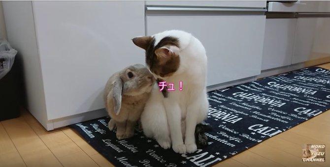 うさぎと仲良しな猫が可愛い♡