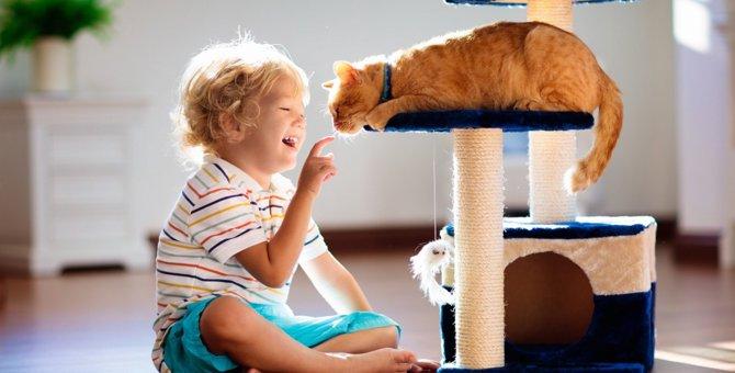 猫と遊んであげなくちゃダメ?「遊び」が持つ4つの意味